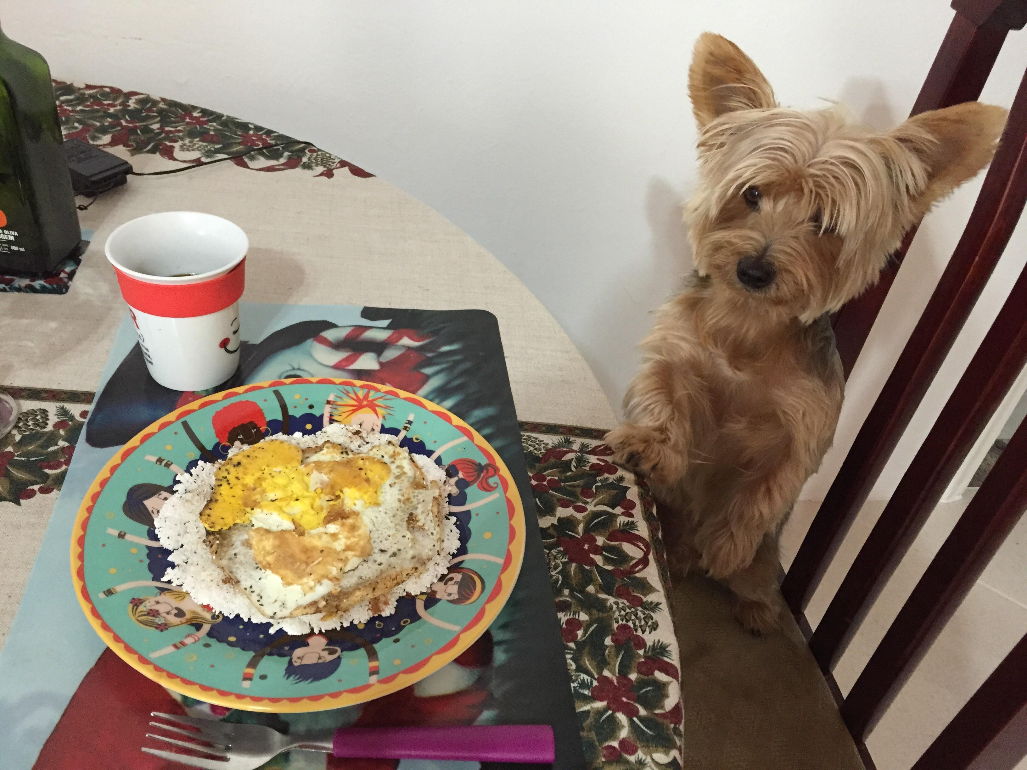 Conhecido Bom dia ! Sou o Luck, estou louco para comer o café da manhã da  JH27